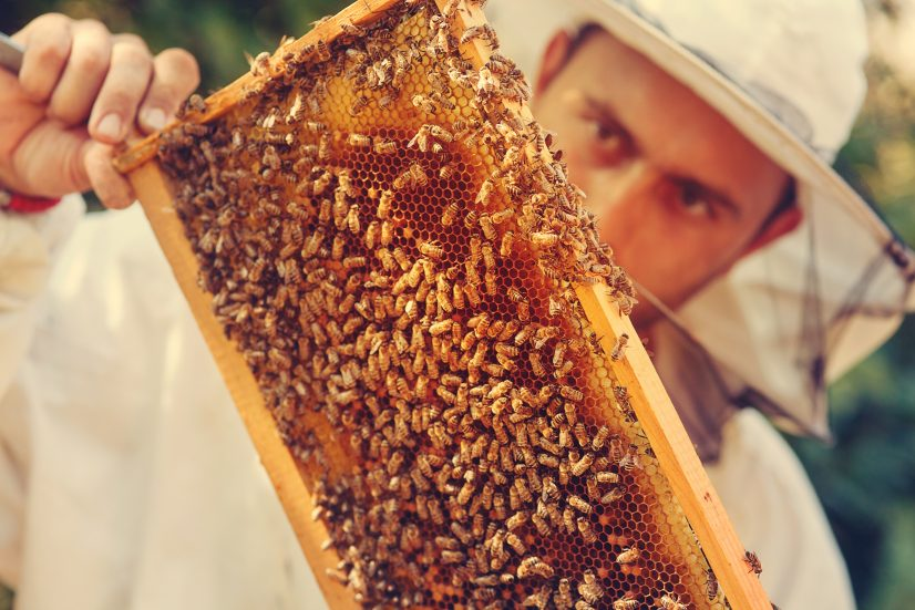 Save our bees. Use vegan honey